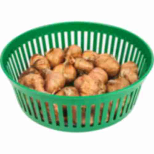 Basket for flower bulbs fi 19cm